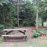 vakantiehuis huren natuur bos drenthe norg pallieter